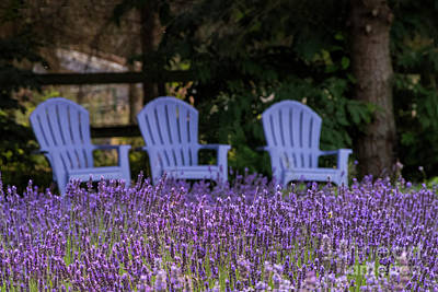 Photograph - Martha Lane Lavender Adirondeck Chairs by Louise Magno