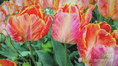 Mixed Media - Marthas Vineyard Tulips Large Canvas Art, Canvas Print, Large Art, Large Wall Decor, Home Decor by David Millenheft