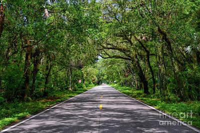Photograph - Martin Grade Scenic Highway by Olga Hamilton