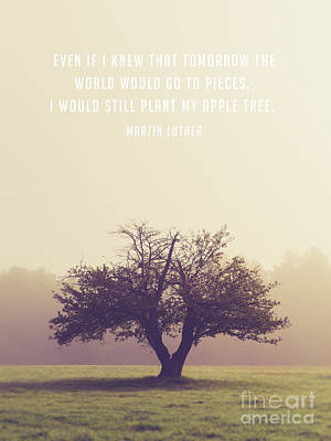 Photograph - Martin Luther Apple Tree Quote by Edward Fielding