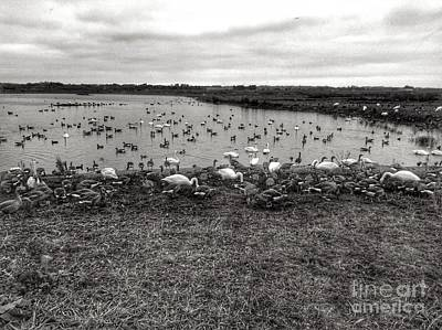 Photograph - Martin Mere Wetlands In Black And White by Joan-Violet Stretch