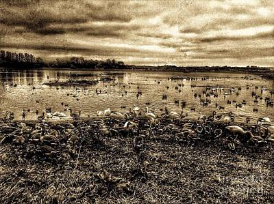 Photograph - Martin Mere Wetlands In Sepia by Joan-Violet Stretch