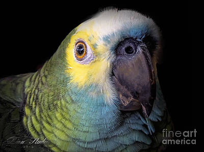 Marty The Blue Front Amazon Art Print by Melissa Messick