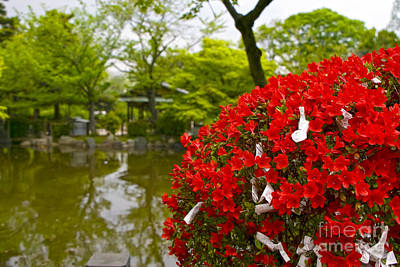 Photograph - Maruyama Park Flowers Kyoto Japan by Waterdancer