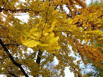 Photograph - Golden Day by S Art
