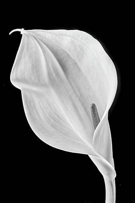 Photograph - Marvelous Calla Lily In Black And White by Garry Gay