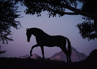 Photograph - Marwari Horse In Twilight by Ekaterina Druz
