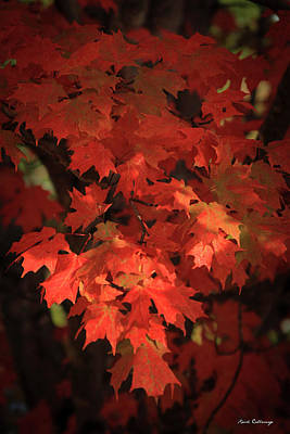 Photograph - Mary Maple Fall Leaf Art by Reid Callaway
