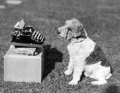 Typewriter Photograph - Mary Pickford's Dog, zorro by Underwood Archives