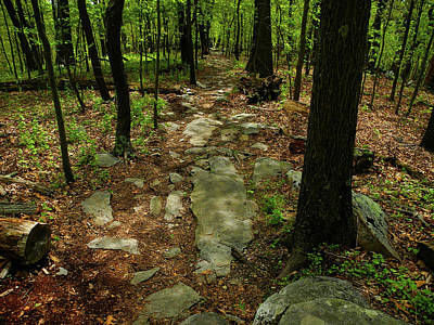 Photograph - Maryland Appalachian Trail Heads Up Hill by Raymond Salani III