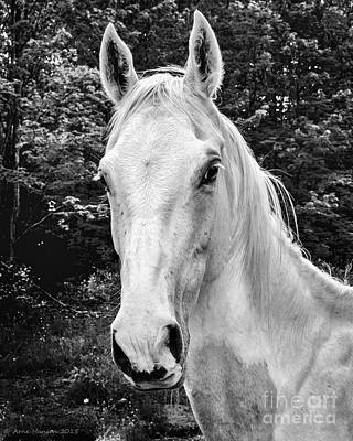 Photograph - Marys' Mare II by Arne Hansen