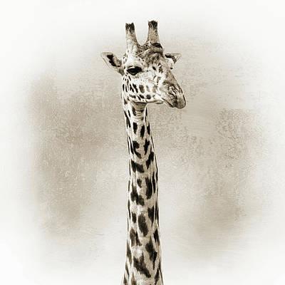 Photograph - Masai Giraffe Closeup Square Sepia by Susan Schmitz