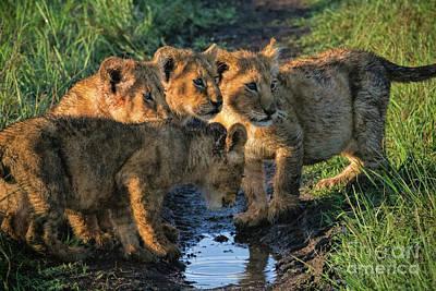 Art Print featuring the photograph Masai Mara Lion Cubs by Karen Lewis