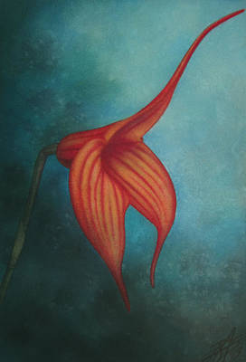 Painting - Masdevallia by Robin Street-Morris