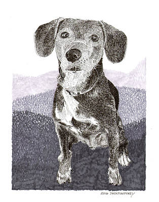 Drawing - Masie Just A Puppy At Heart by Jack Pumphrey