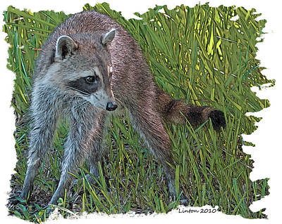 Raccoon Digital Art - Masked Bandit by Larry Linton