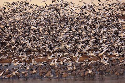 Photograph - Mass Exodus by Leda Robertson