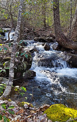 Photograph - Massanutten Mountain Spring by Lara Ellis