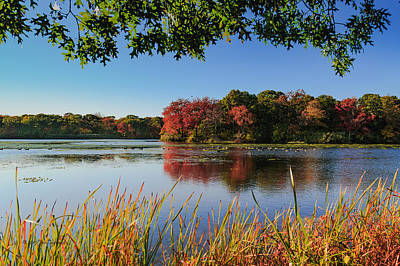 Photograph - Massapequa Nature Preserve by Jose Oquendo