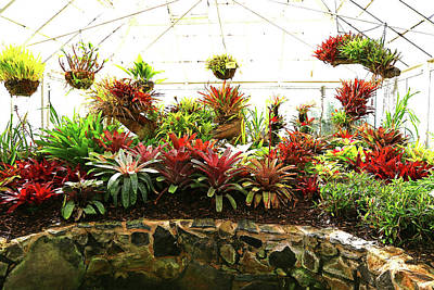 Photograph - Massed Bromeliad In Hothouse by Nareeta Martin