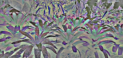 Photograph - Massed Bromeliads by Nareeta Martin