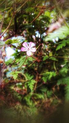 Photograph - Massinet by Isabella F Abbie Shores