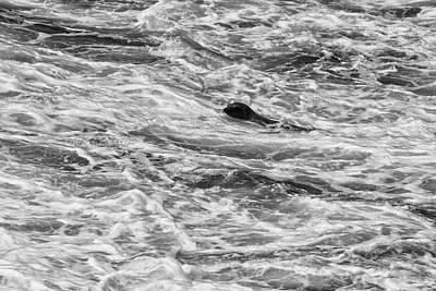 Photograph - Master Diver Bw by Robert Hebert