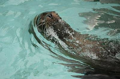 Pittsburgh Zoo Photograph - Master Swimmer by Shelley Smith