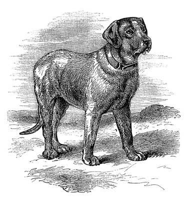 Mastiff Dog Painting - Mastiff Dog by MotionAge Designs