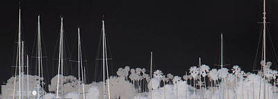 Photograph - Masts by Dana Patterson