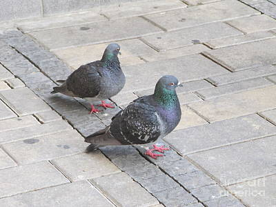 Photograph - Mated Pigeons by Donna L Munro