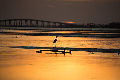 Tide Photograph - Mating Call by J Darrell Hutto