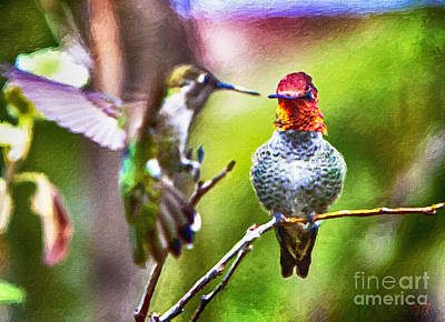 Hummingbird Painting - Mating Dance by David Millenheft