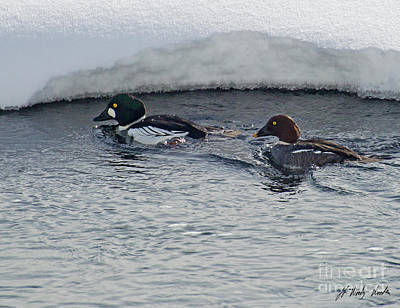 Photograph - Mating Pair Of Goldeneyes-signed-#9837 by J L Woody Wooden
