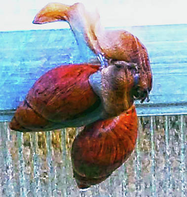 Photograph - Mating Snails by Gina O'Brien