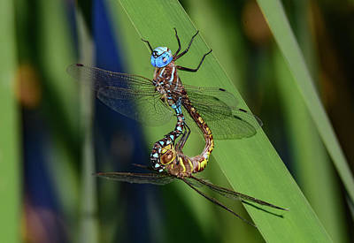 Photograph - Mating Wheel  by Rick Mosher