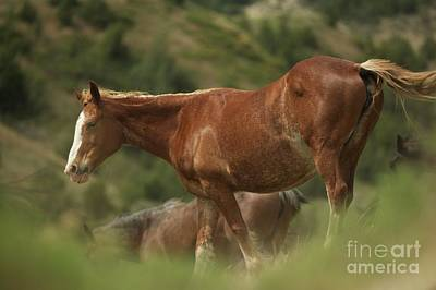 Amy Weiss - Matriarch Mare by Chris Brewington Photography LLC