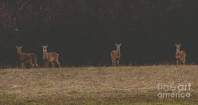 Photograph - Matte Print Of Four Deer by Cheryl Baxter
