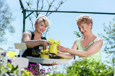 Cheerful Photograph - Mature Gardener Helps Senior Client With Flowers by Michal Bednarek