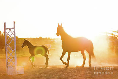Photograph - Mature Horse And A Colt Standing On The Sand Field by Michal Bednarek