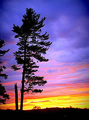 Photograph - Maudslay Sunset by Suzanne DeGeorge