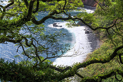 Branch Wall Art - Photograph - Maui by Chad Dutson