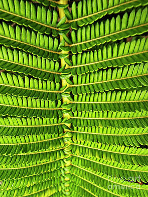 Photograph - Maui Fern Garden 07051161   by Tom Jelen