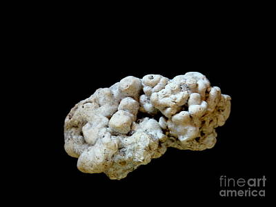 Photograph - Maui Fossil Two by Fred Wilson