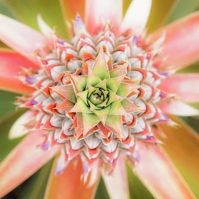 Photograph - Maui Gold Crown by Hawaii Fine Art Photography