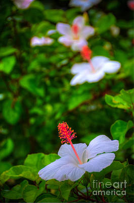 Photograph - Maui Hibiscus by Kelly Wade