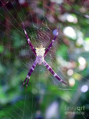 Photograph - Maui Orbweaver/garden Spider by Gena Weiser