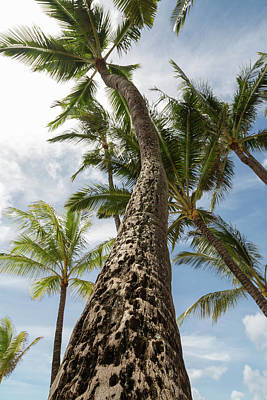 Photograph - Maui Palm 2 by John Daly