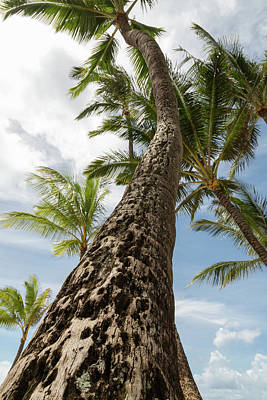 Photograph - Maui Palm  by John Daly