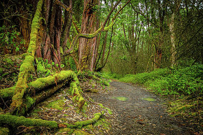 Photograph - Maui Rainforest by David Cote
